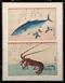 広重 魚類画--魚 広重 魚類画--えび